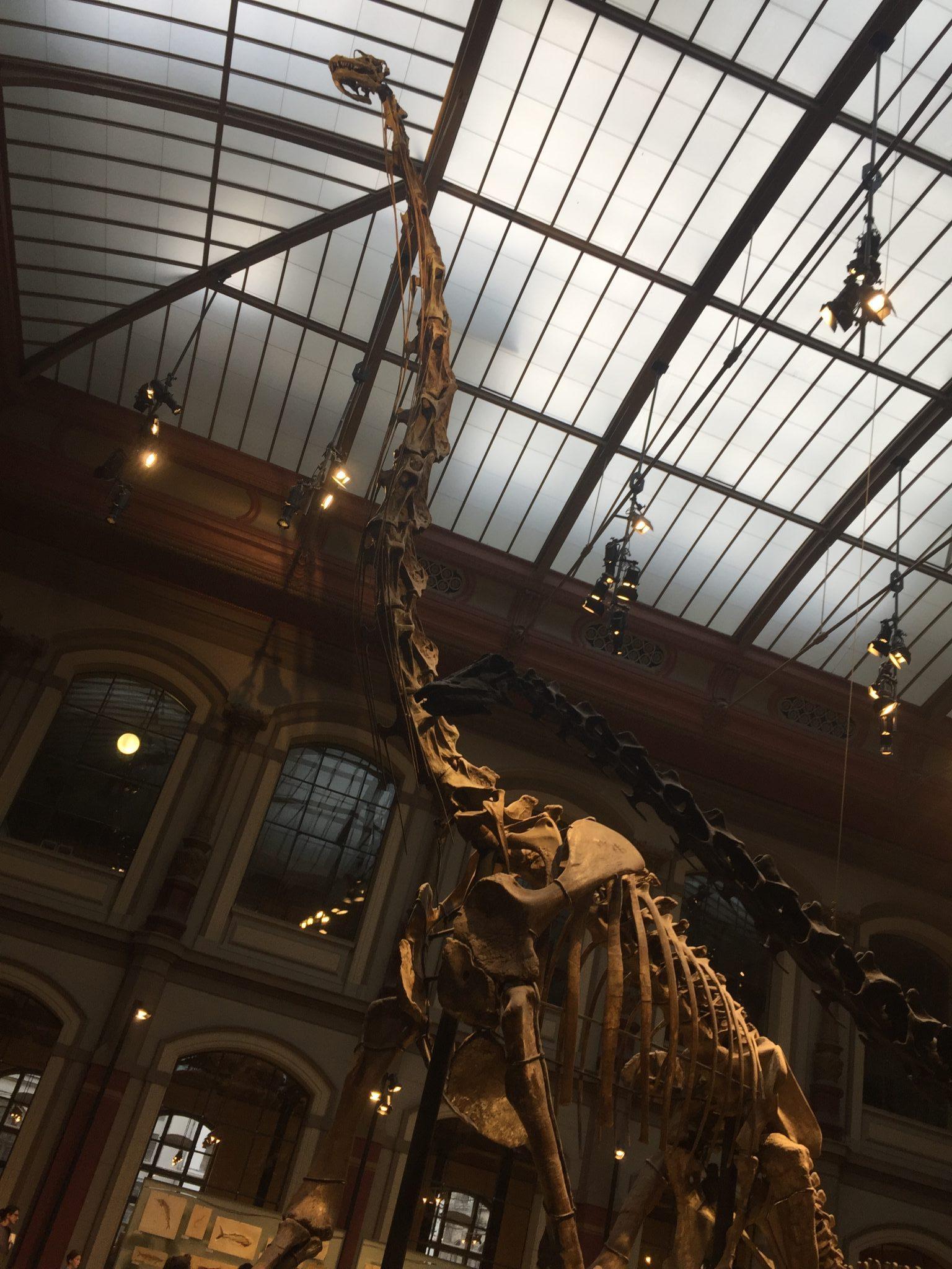 Brachiosaurus Giraffatitan Berlin