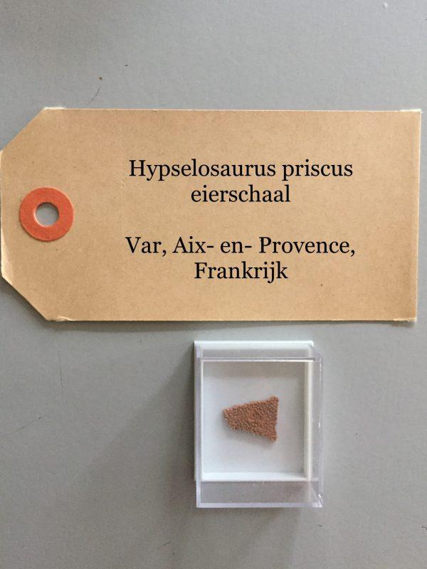 Hypselosaurus eierschaal