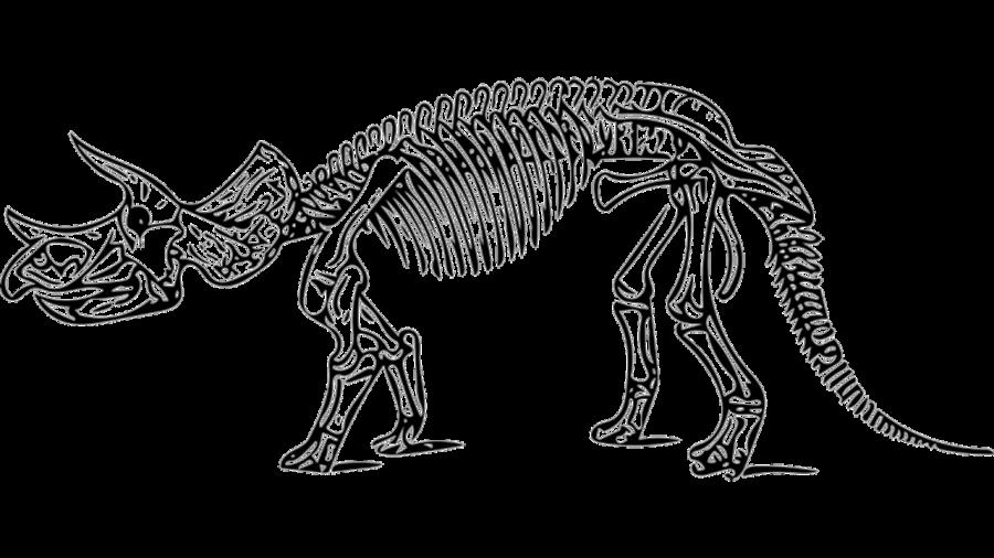Triceratops fossiel