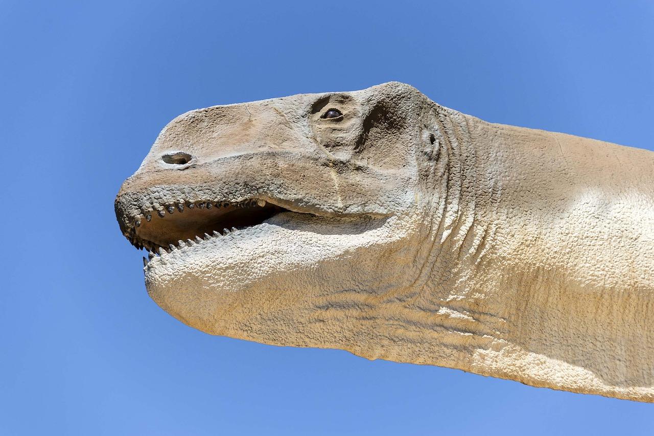 Kop van een sauropode dinosaurus